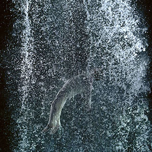 B. Viola,Tristan's Ascension (The Sound of a Mountain Under a Waterfall), 2005